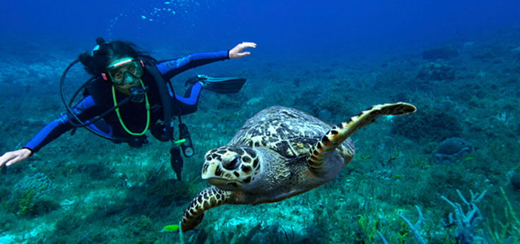 SCUBA Diver swimming with sea turtle