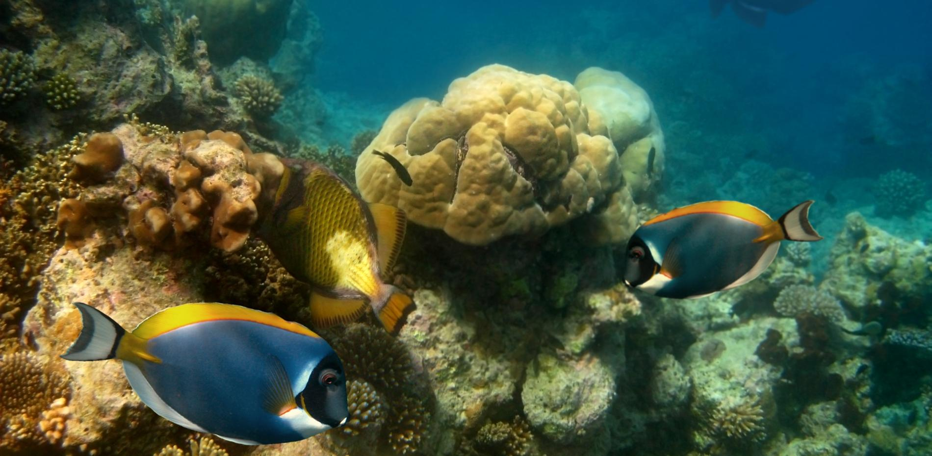 Fishes among the coral reef at the bottom of the ocean